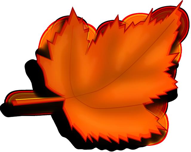 maple-autumn-fall-leaf-orange-150741 3